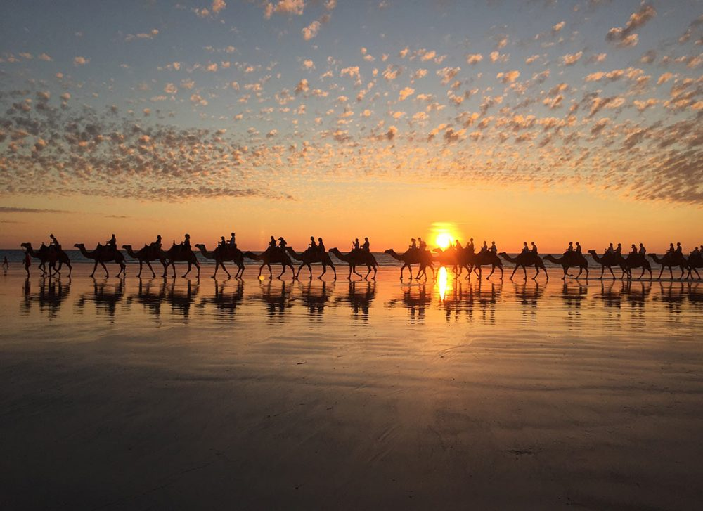 夕陽とラクダの写真