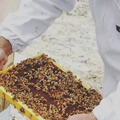 巣箱の中の蜂