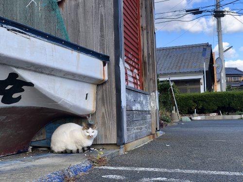 壱岐 猫 海 食堂 はらほげ