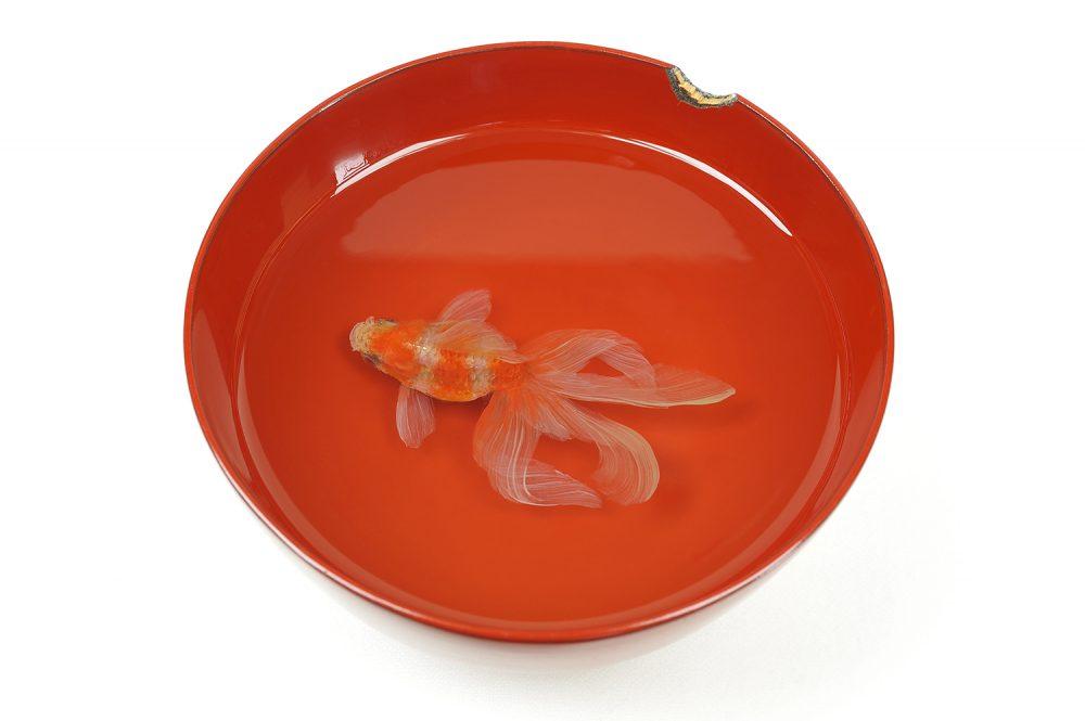 特別展 深堀隆介展 金魚鉢、地球鉢